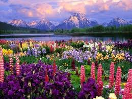 Tetons with flowers