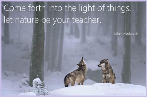 Wolves - Wordworth