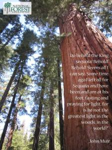 Behold! The King Sequoia
